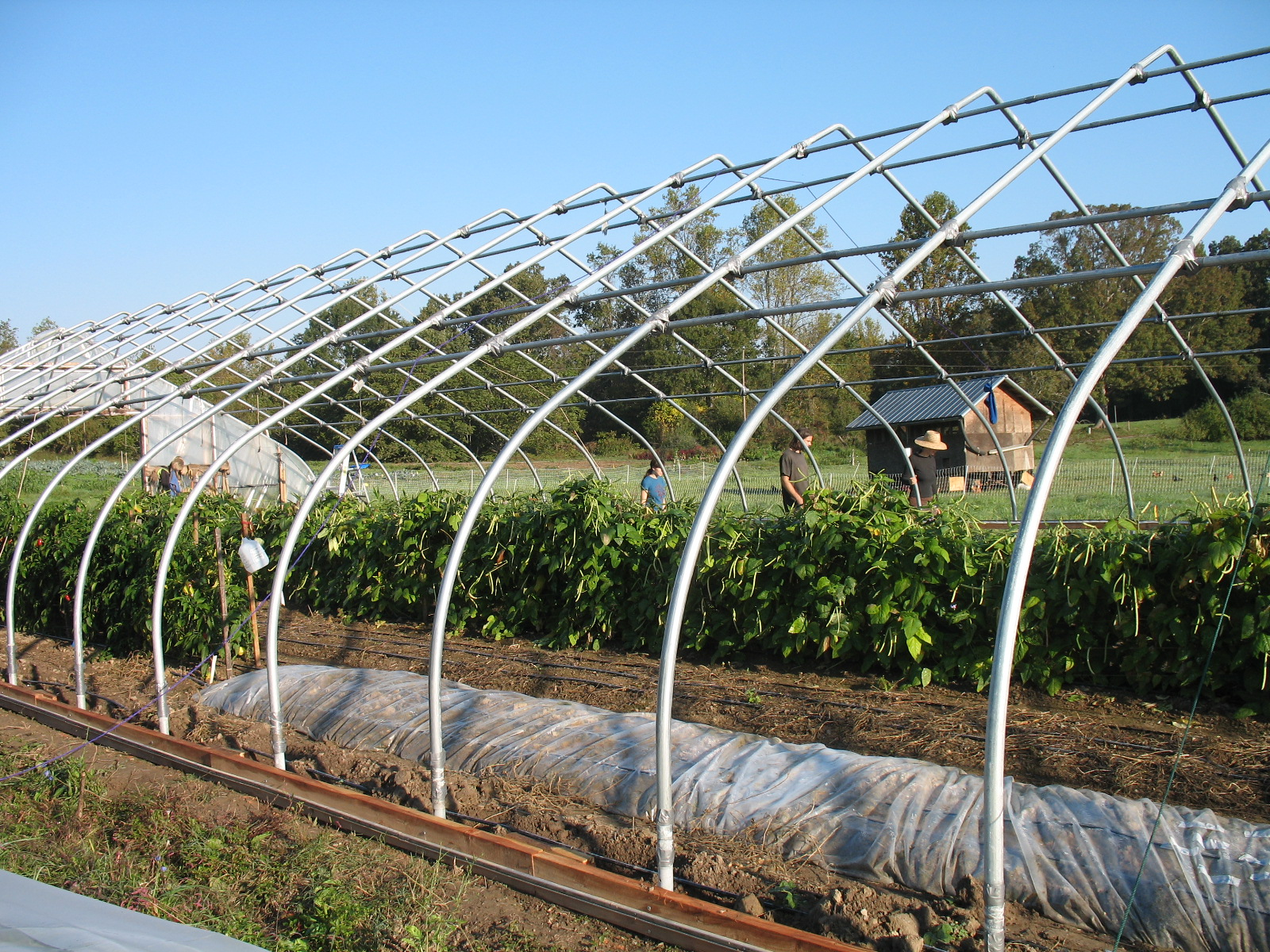 replace hoophouse plastic | Sustainable Market Farming