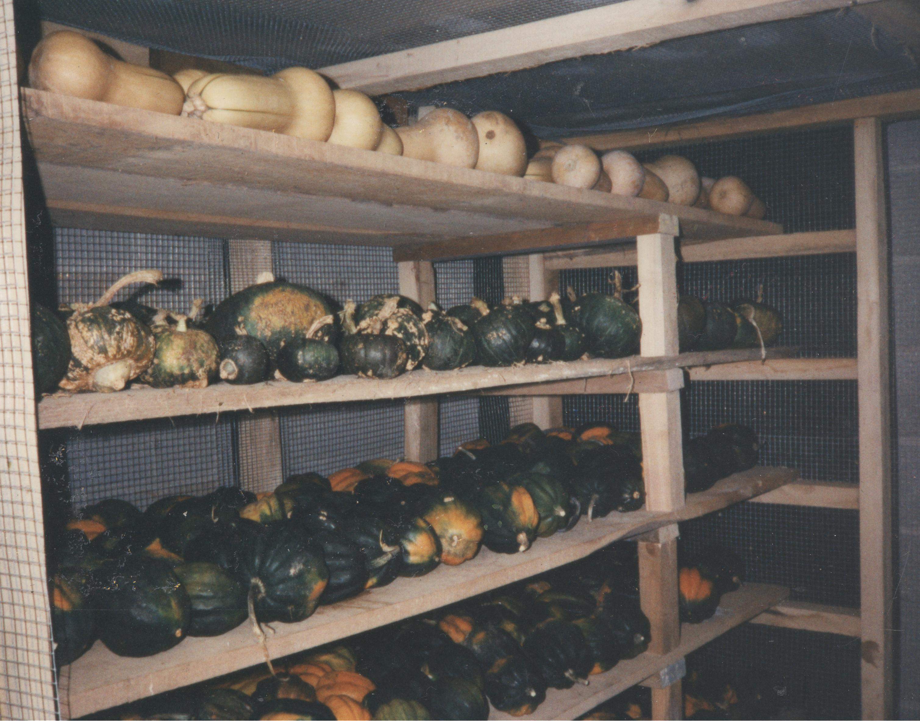 Winter Squash In Storage ...