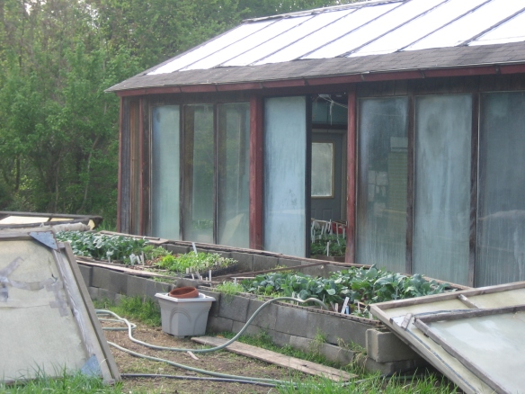 Our coldframes and greenhouse
