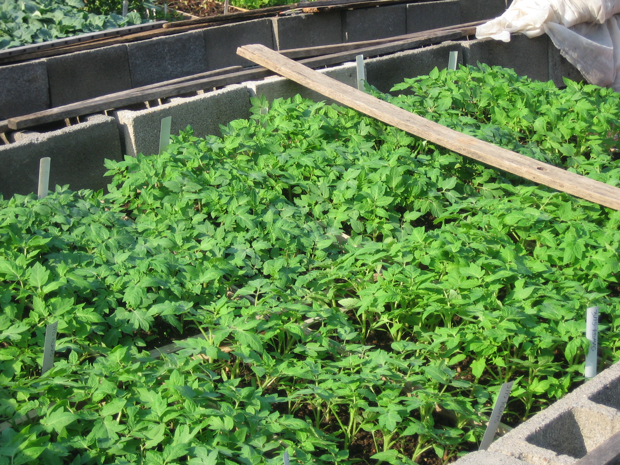 cold frames   Sustainable Market Farming