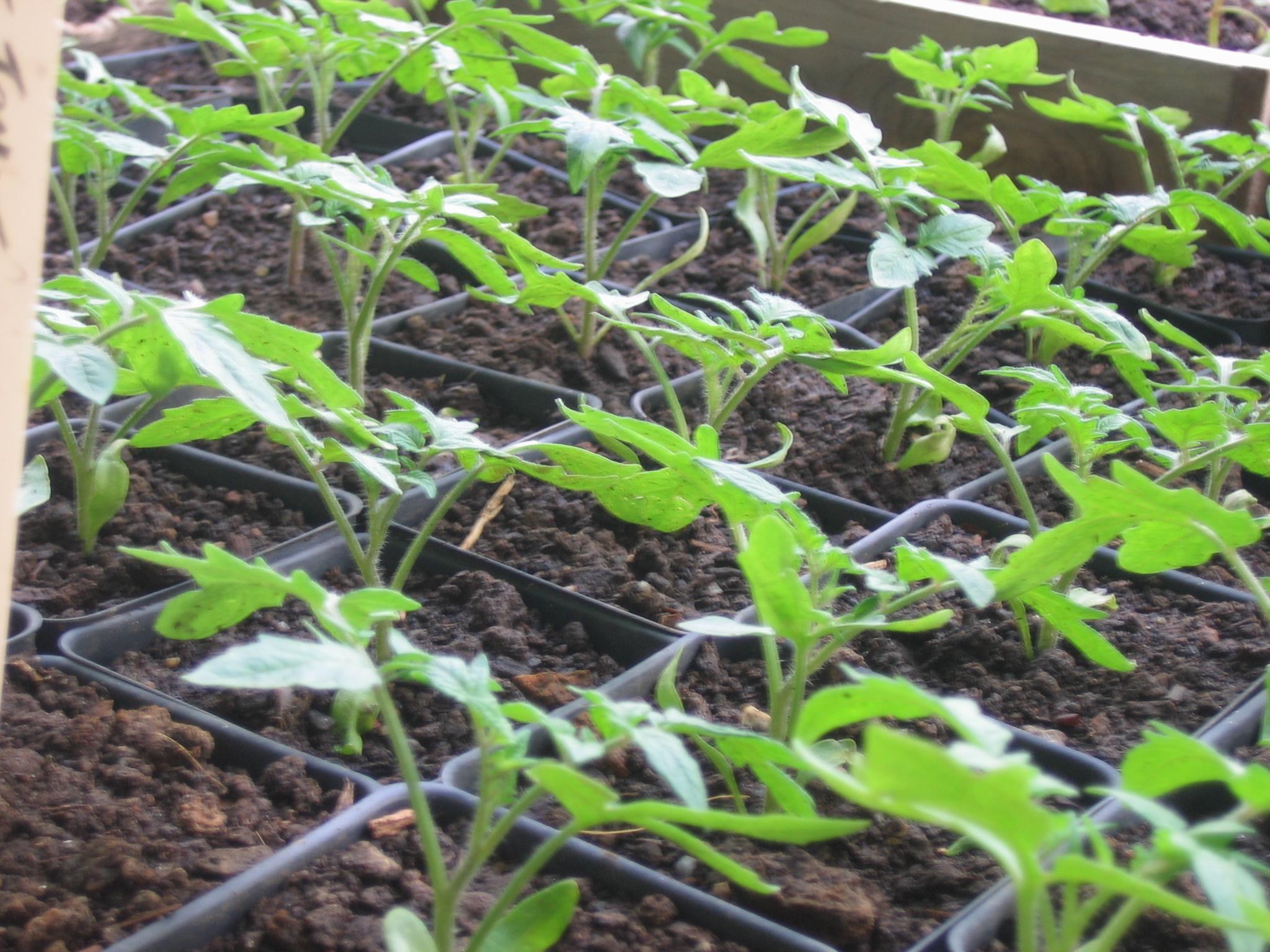 Biodegradable Plastic Mulch Sustainable Market Farming