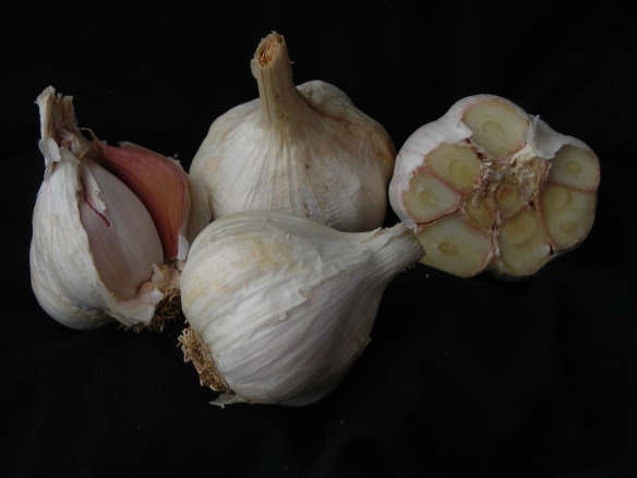 Polish White - our  softneck garlic variety. Credit Southern Exposure Seed Exchange