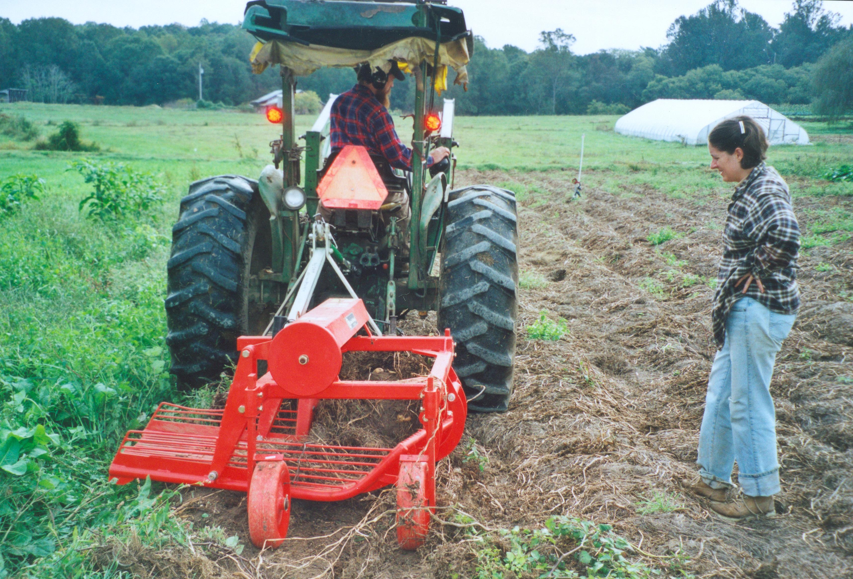 Potato Harvest Sustainable Market Farming