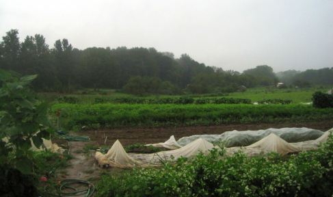 Soggy Saturday garden. Credit Ezra Freeman